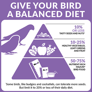 Three-tiered food pyramid showing how to feed a pet bird a balanced daily diet. The bottom tier of nutrient-rich bird food represents 50 to 75%25 of the diet. The middle tier of fruits, vegetables and leafy greens is 10 to 25%25 of the diet. The top tier of seeds and nuts is 10%25 of less of the daily diets.