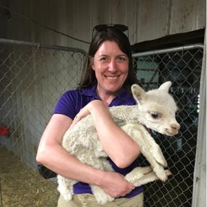 Mazuri alpaca researcher Dr. Jen Parsons holding a silky baby alpaca, called a cria, in a barn.